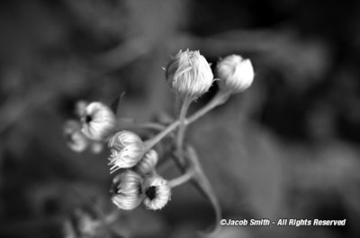 Its Not Just A Color Image Minus The Any Flower That Can Also Be As Stunning In BW